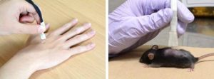 生体表面の熱計測の様子(臨床実験と動物実験)